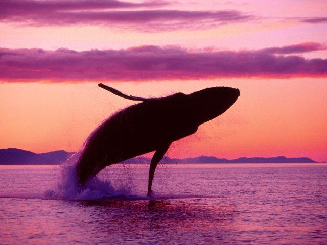 whale-free
