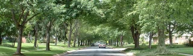 urbanforest