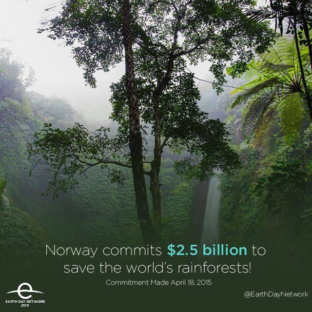 norwayforest