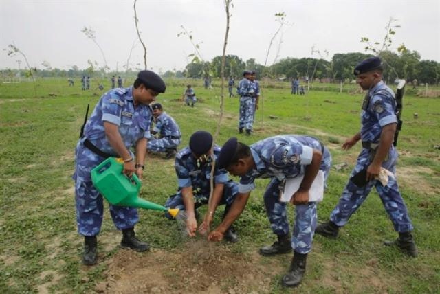 treeplant