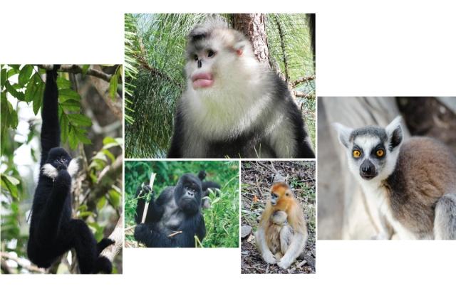 Garber_primates_002